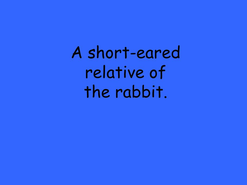 A short-eared relative of the rabbit.