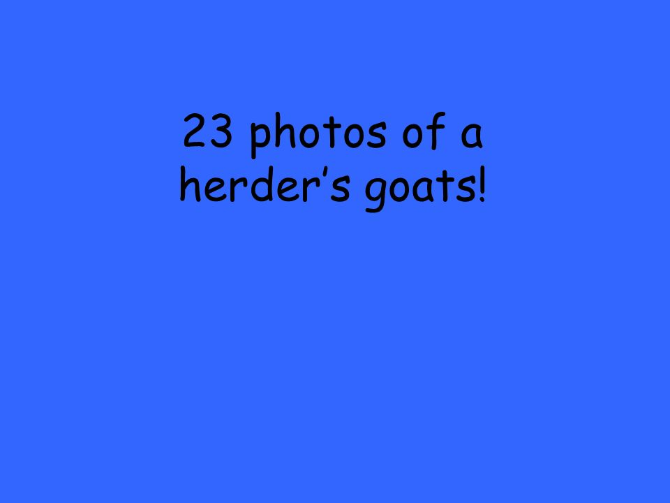 23 photos of a herders goats!