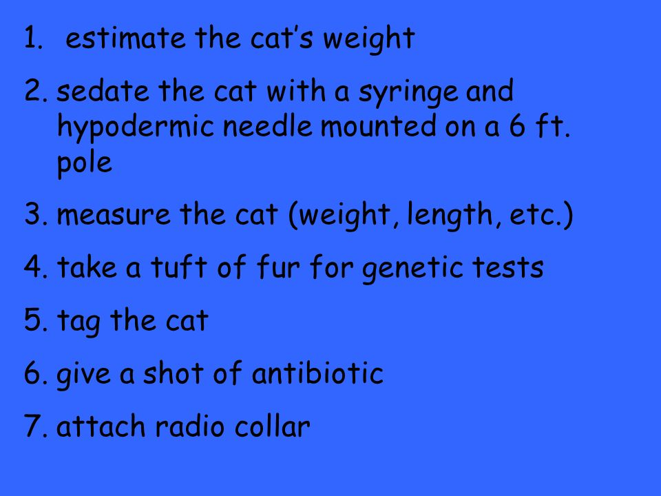 1. estimate the cats weight 2.sedate the cat with a syringe and hypodermic needle mounted on a 6 ft. pole 3.measure the cat (weight, length, etc.) 4.t