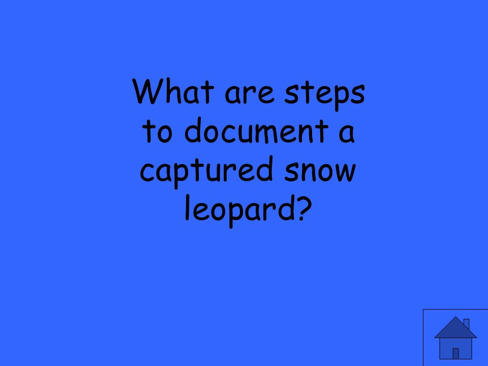 What are steps to document a captured snow leopard?
