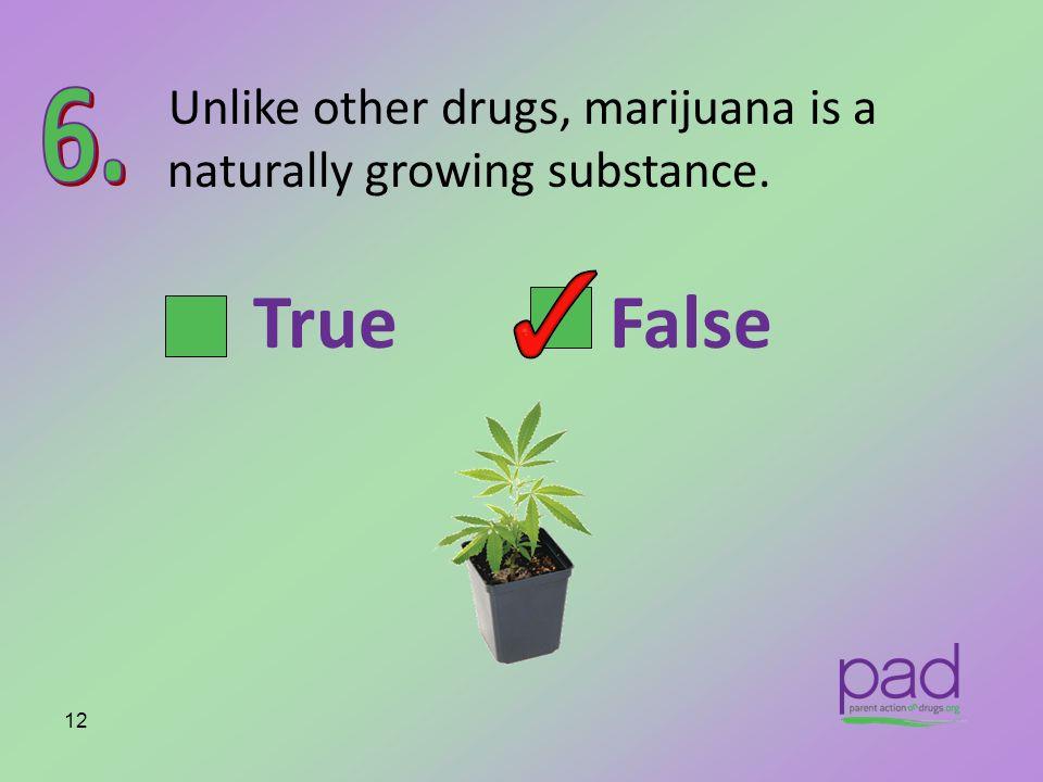 Unlike other drugs, marijuana is a naturally growing substance. 12 True False