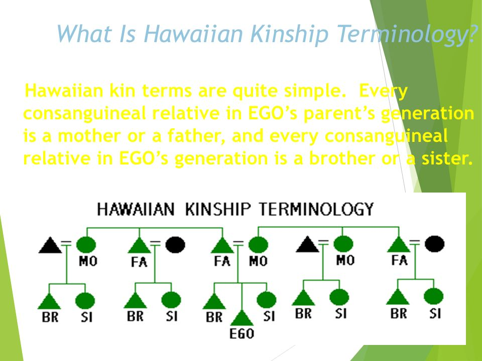 What Is Omaha Kinship Terminology? Omaha terminology is the mirror image of Crow terminology. Parallel relatives on EGOs mothers and fathers side are