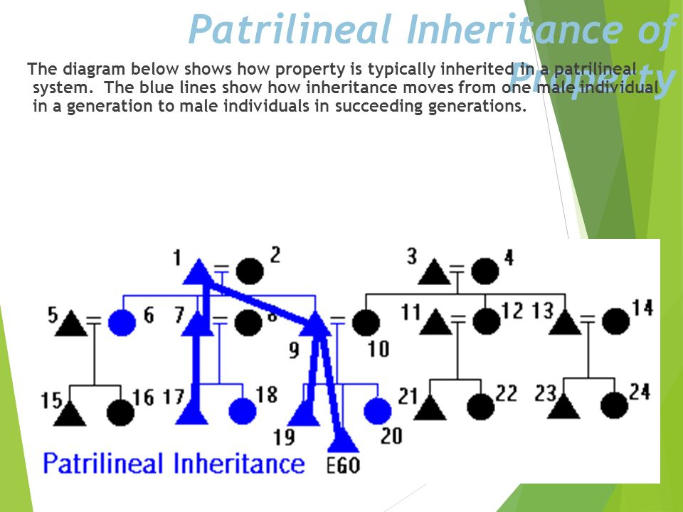 Diagraming a Patrilineage The diagram below show all relatives in EGOs patrilineage in blue. Notice that if a person is in EGOs patrilineage, all sibl