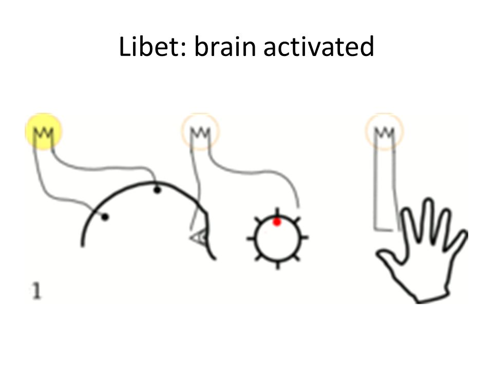 Libet: brain activated