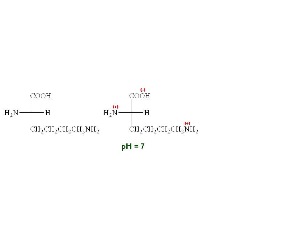 pH = 7 (–) (+)
