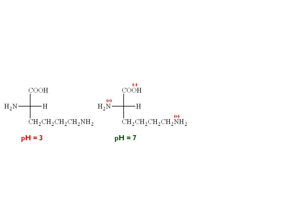 pH = 3pH = 7 (–) (+)