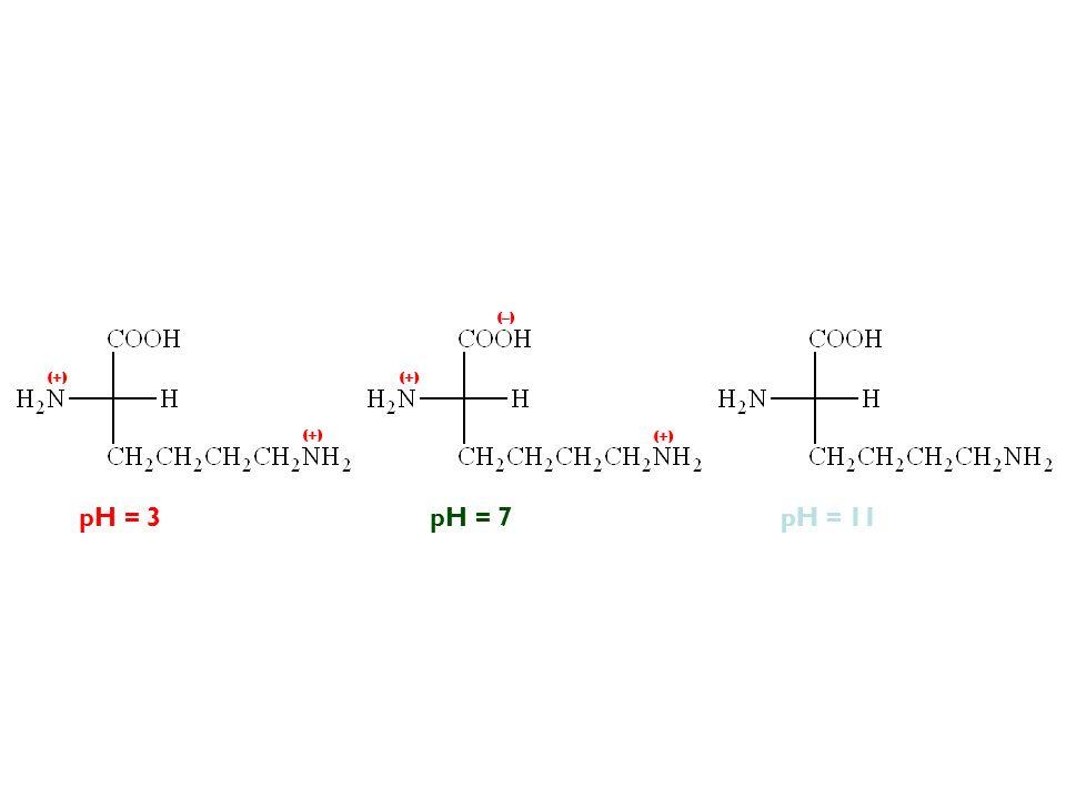 pH = 11pH = 3pH = 7 (–) (+)