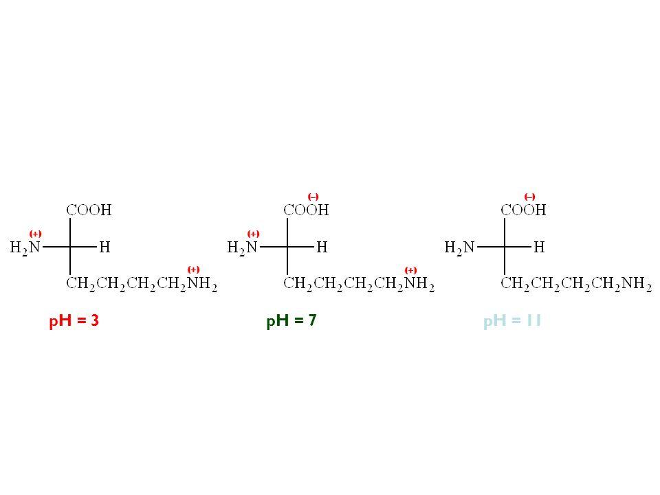 pH = 11pH = 3pH = 7 (–) (+) (–)