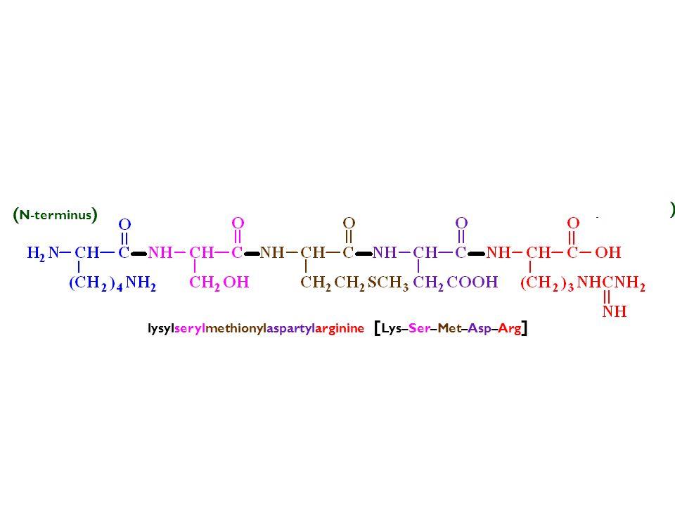 lysylserylmethionylaspartylarginine [ Lys–Ser–Met–Asp–Arg ] (–) ( N-terminus ) ( C-terminus ) (+)