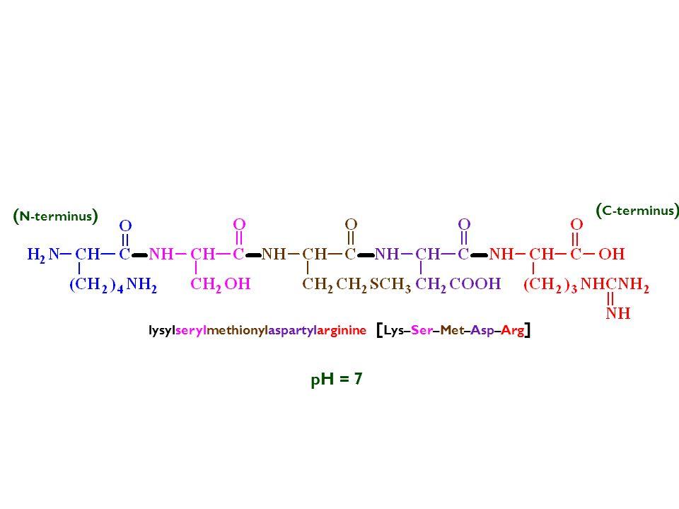 pH = 7 lysylserylmethionylaspartylarginine [ Lys–Ser–Met–Asp–Arg ] (–) ( N-terminus ) ( C-terminus )