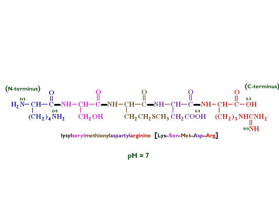 pH = 7 lysylserylmethionylaspartylarginine [ Lys–Ser–Met–Asp–Arg ] (–) ( N-terminus ) ( C-terminus ) (+)