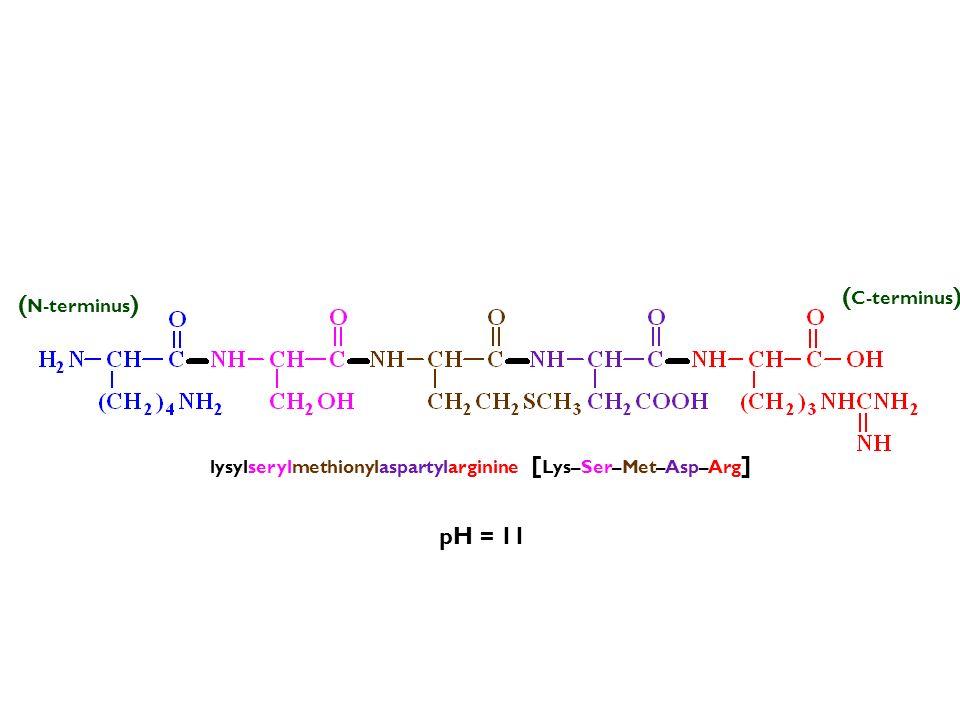 pH = 11 lysylserylmethionylaspartylarginine [ Lys–Ser–Met–Asp–Arg ] (–) ( N-terminus ) ( C-terminus )
