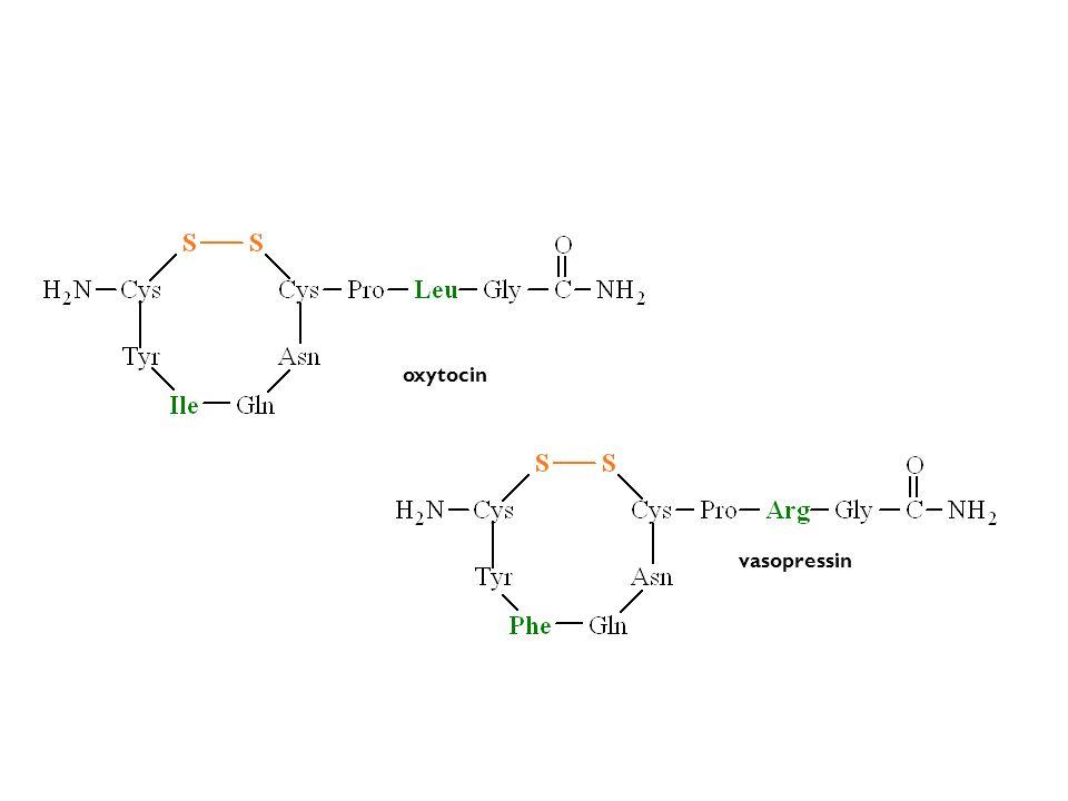 oxytocin vasopressin
