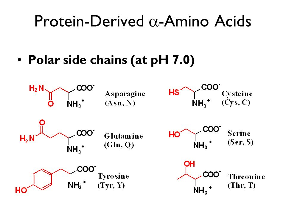 Protein-Derived -Amino Acids Polar side chains (at pH 7.0)