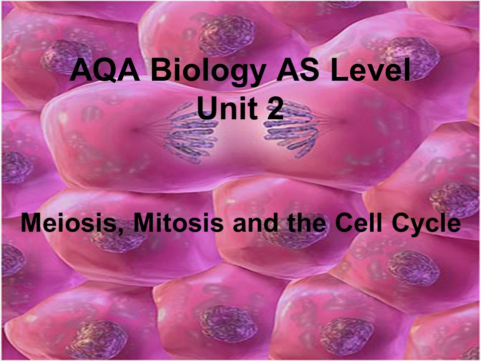 AQA Biology AS Level Unit 2 Meiosis, Mitosis and the Cell Cycle