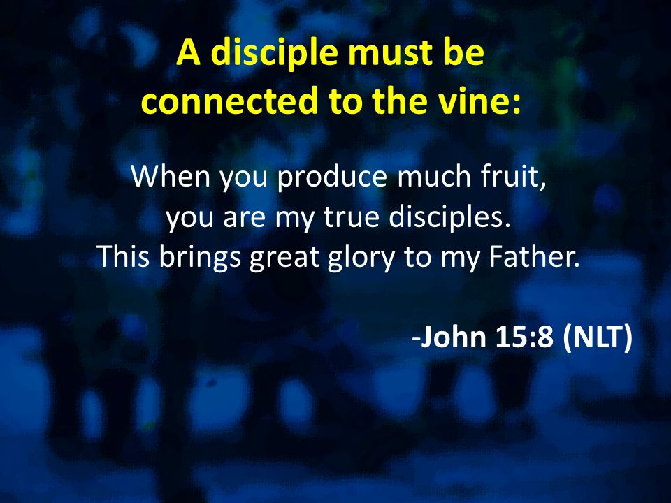 A disciple must be connected to the vine: When you produce much fruit, you are my true disciples. This brings great glory to my Father. -John 15:8 (NL