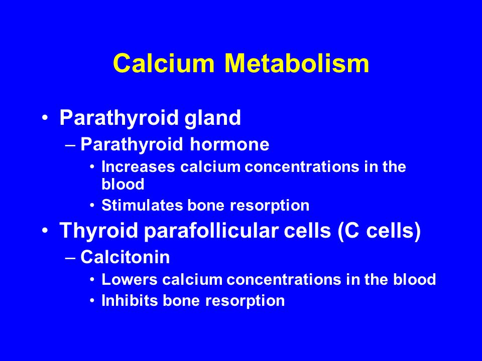 Calcium Metabolism Parathyroid gland –Parathyroid hormone Increases calcium concentrations in the blood Stimulates bone resorption Thyroid parafollicular cells (C cells) –Calcitonin Lowers calcium concentrations in the blood Inhibits bone resorption