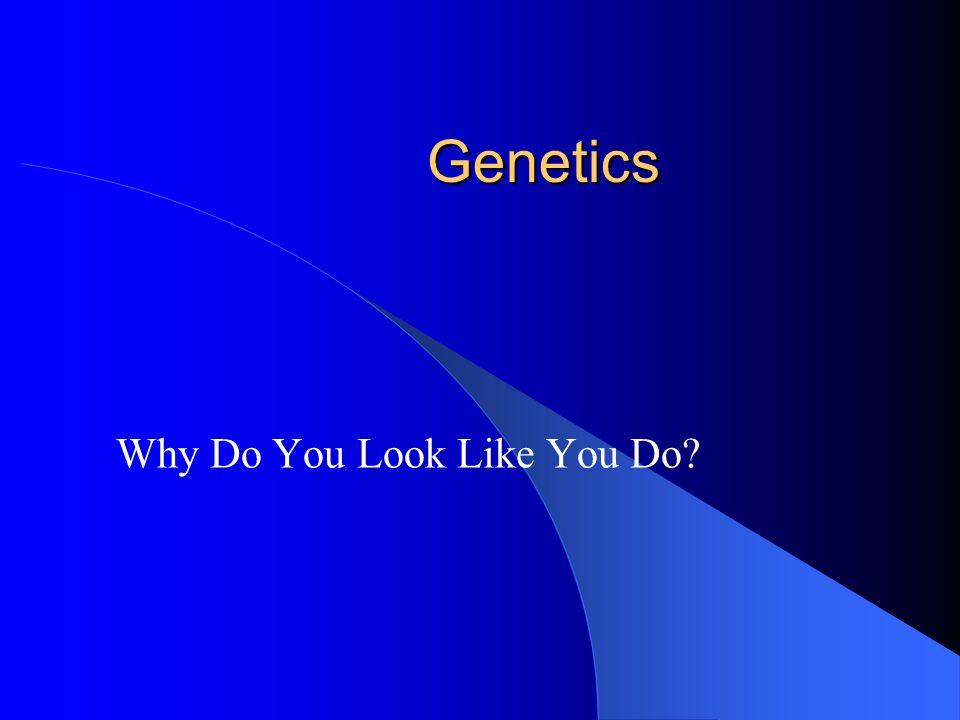 Genetics Why Do You Look Like You Do?
