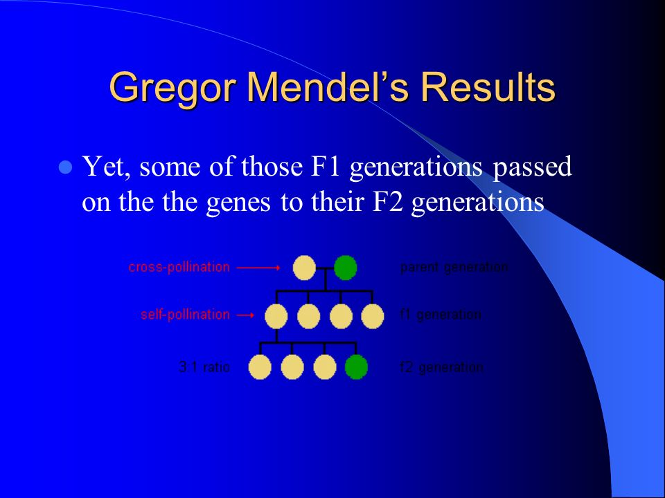 Gregor Mendels Results Yet, some of those F1 generations passed on the the genes to their F2 generations