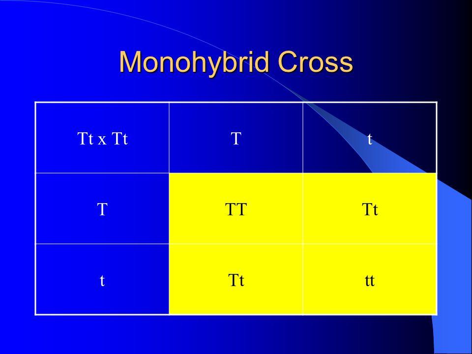 Monohybrid Cross Tt x TtTt TTTTt t tt
