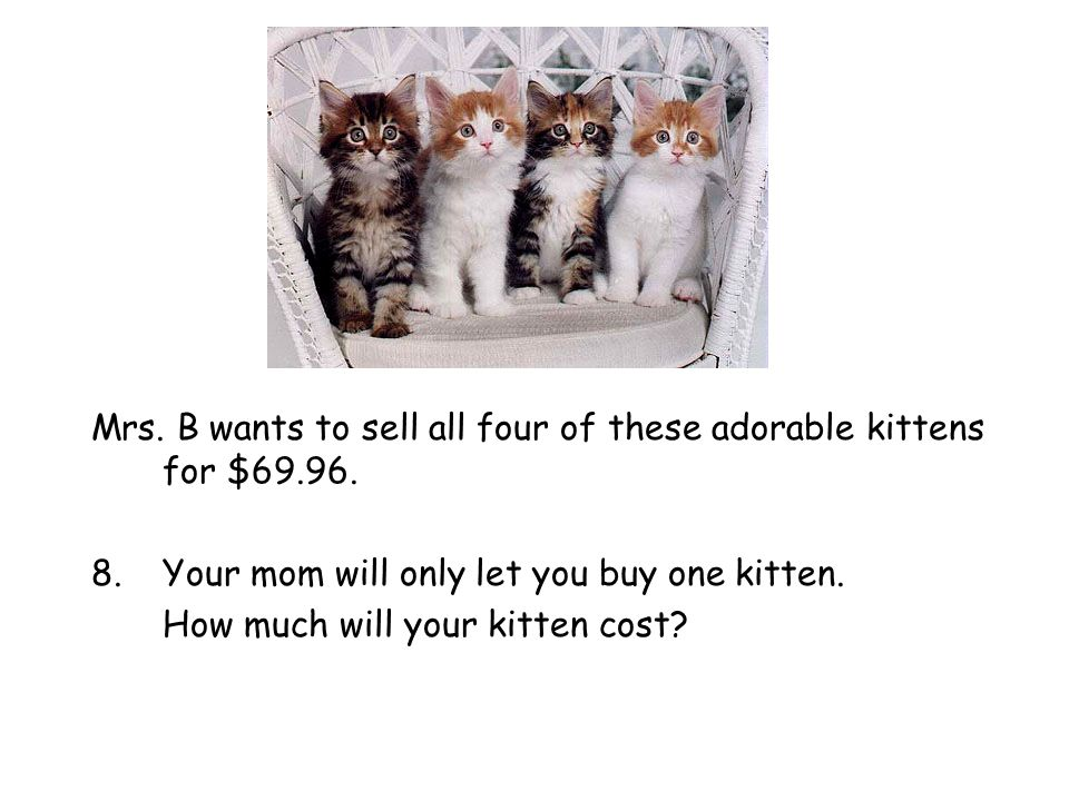 Mrs. B wants to sell all four of these adorable kittens for $69.96.