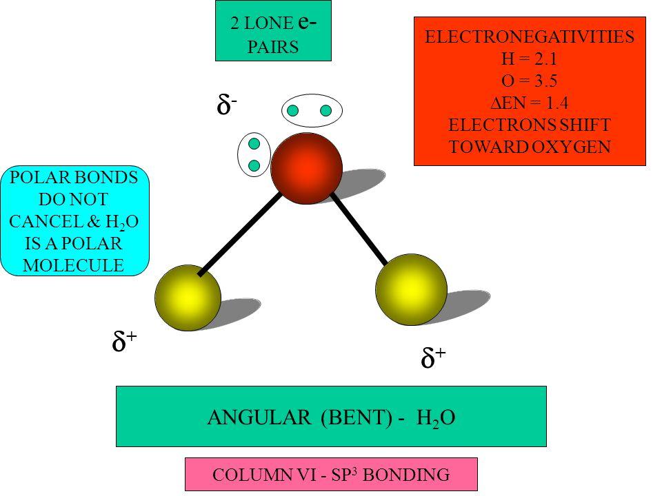 ANGULAR (BENT) - H 2 O - + ELECTRONEGATIVITIES H = 2.1 O = 3.5 EN = 1.4 ELECTRONS SHIFT TOWARD OXYGEN + POLAR BONDS DO NOT CANCEL & H 2 O IS A POLAR MOLECULE 2 LONE e- PAIRS COLUMN VI - SP 3 BONDING