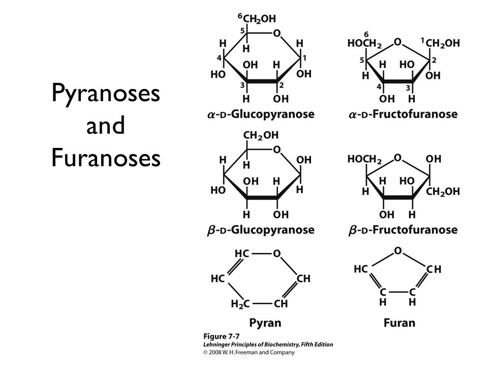 Pyranoses and Furanoses