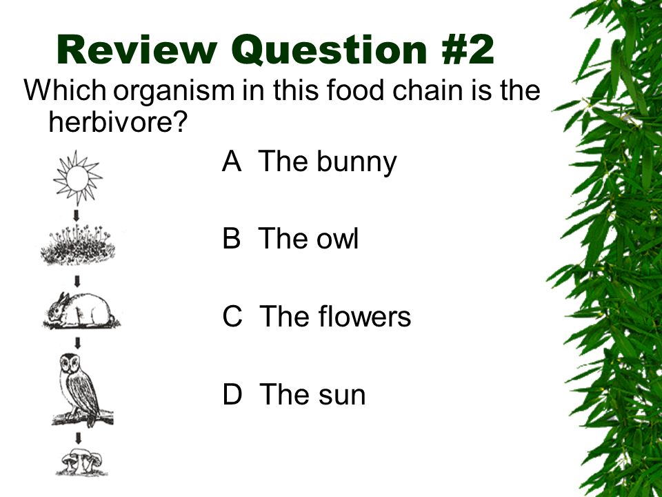 Herbivores are animals that only eat plants. Herbivores are found at the beginning of the food chain because they eat the producers (plants)