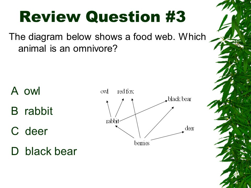 Food Web Most organisms eat more the JUST one organism Food webs are more complex than food chains and involve lots of organisms
