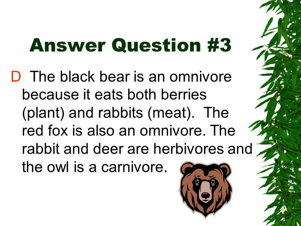 Review Question #3 The diagram below shows a food web. Which animal is an omnivore? A owl B rabbit C deer D black bear