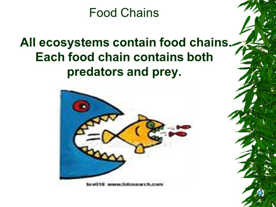 4 th Grade Life Science Food Chains and Ecosystems