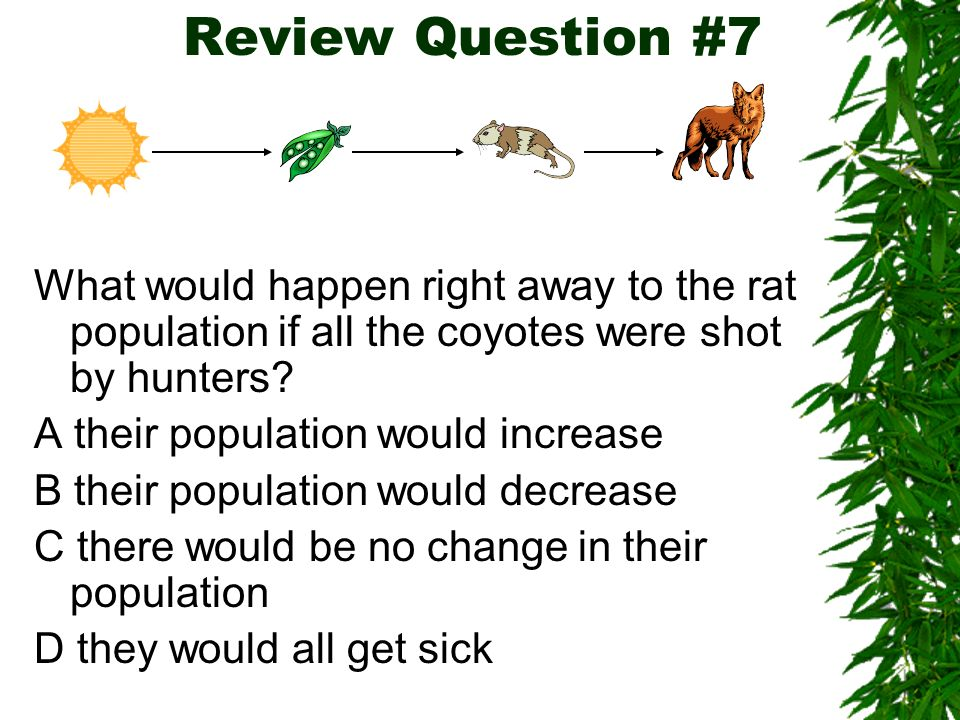 Food webs and ecosystems can be affected by changes in animal populations. If a disease killed all the birds in this ecosystem, then the population of