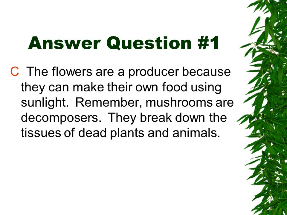 Review Question #1 Which organism in this food chain is the producer? A The bunny B The owl C The flowers D The sun