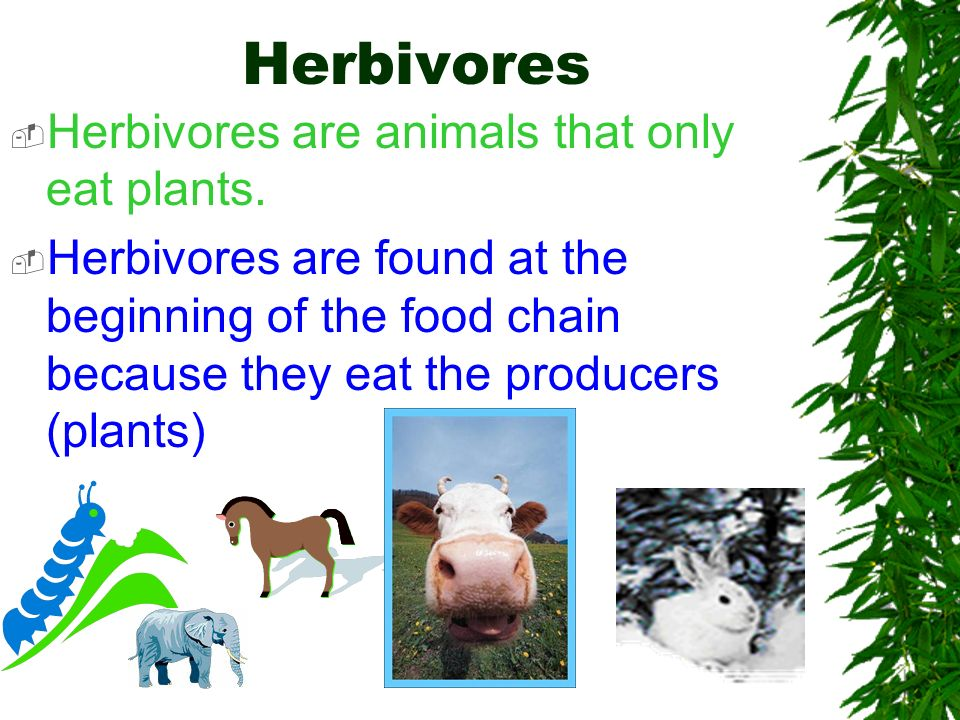 Animals are consumers. Some consume plants to get the energy they need to live. Others consume other animals.
