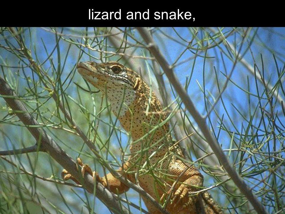 lizard and snake,