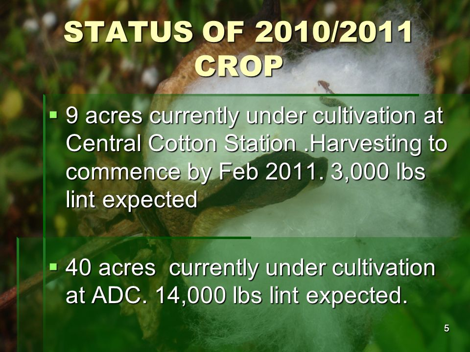 5 STATUS OF 2010/2011 CROP 9 acres currently under cultivation at Central Cotton Station.Harvesting to commence by Feb 2011. 3,000 lbs lint expected 9