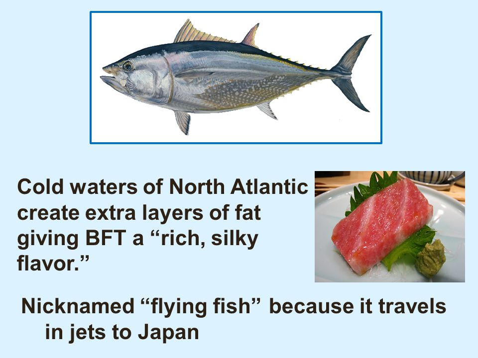 Quantity (millions of lbs per year) D 1995 S 1995 P e 95 Q e 95 Market for Atlantic Bluefin Tuna, 1995 E = Market Equilibrium no pressure to because buyers and sellers are