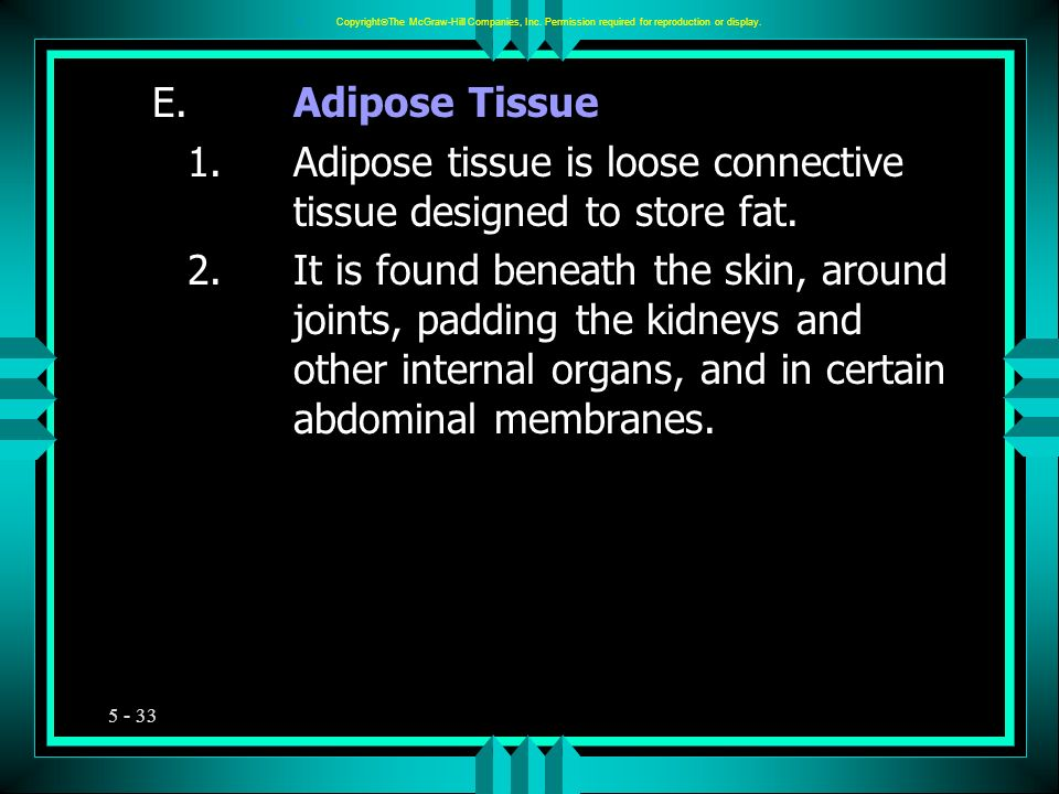 5 - 33 E.Adipose Tissue 1.Adipose tissue is loose connective tissue designed to store fat. 2.It is found beneath the skin, around joints, padding the