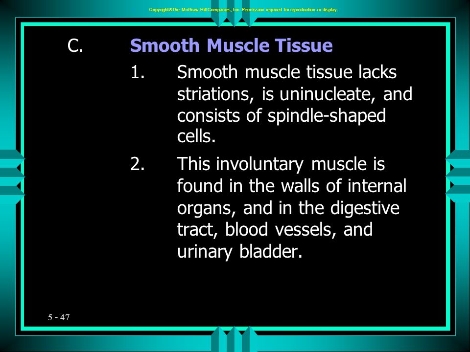 5 - 47 C.Smooth Muscle Tissue 1.Smooth muscle tissue lacks striations, is uninucleate, and consists of spindle-shaped cells. 2.This involuntary muscle