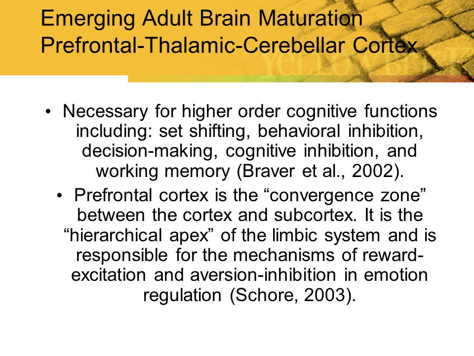 Emerging Adult Brain Maturation Prefrontal-Thalamic-Cerebellar Cortex Necessary for higher order cognitive functions including: set shifting, behavior