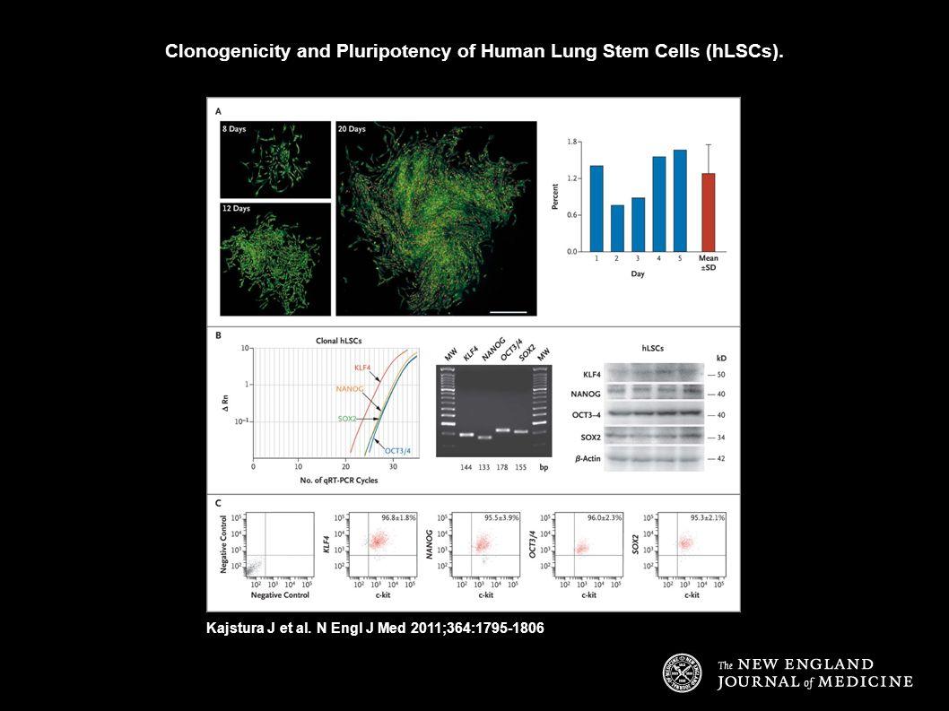 Clonogenicity and Pluripotency of Human Lung Stem Cells (hLSCs). Kajstura J et al. N Engl J Med 2011;364:1795-1806