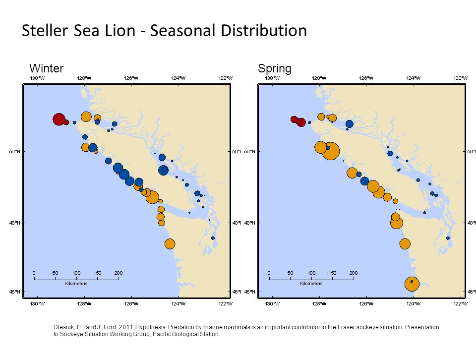 Steller Sea Lion - Seasonal Distribution WinterSpring Olesiuk, P., and J. Ford. 2011. Hypothesis: Predation by marine mammals is an important contribu
