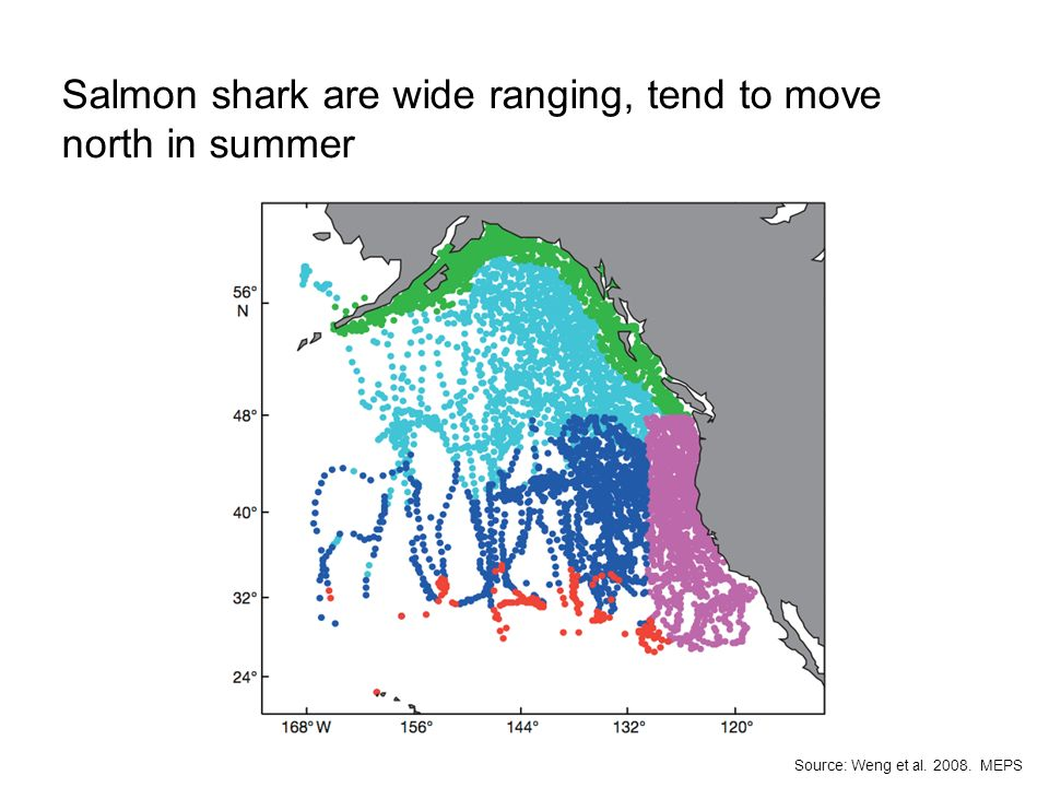 Salmon shark are wide ranging, tend to move north in summer D. Perrine Source: Weng et al. 2008. MEPS