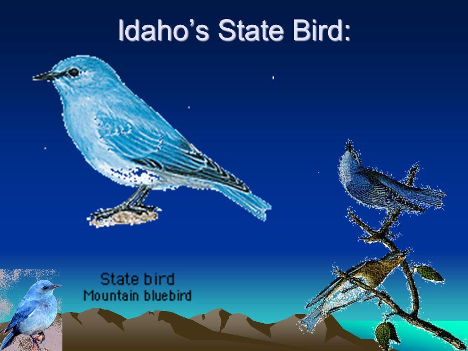 Idahos State Flower: