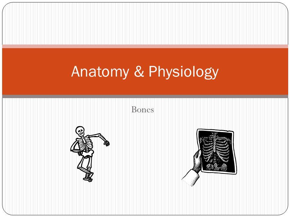 Bones Anatomy & Physiology