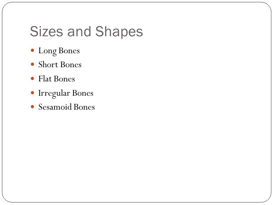 Sizes and Shapes Long Bones Short Bones Flat Bones Irregular Bones Sesamoid Bones