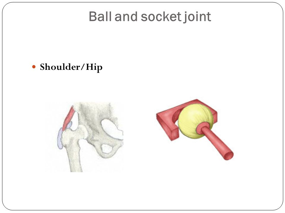 Ball And Socket Joint Shoulder Ball And Socket Joint