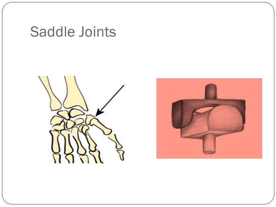 Saddle Joints