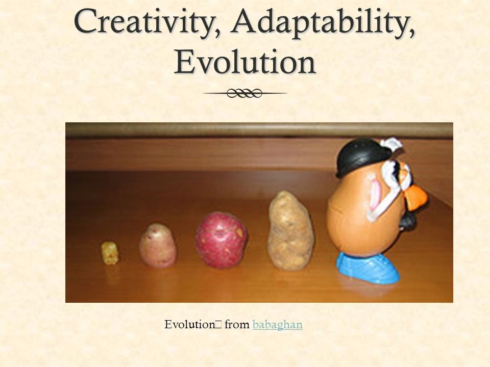 Creativity, Adaptability, Evolution Evolution from babaghanbabaghan