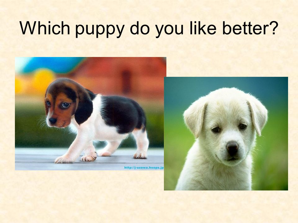 Which puppy do you like better?